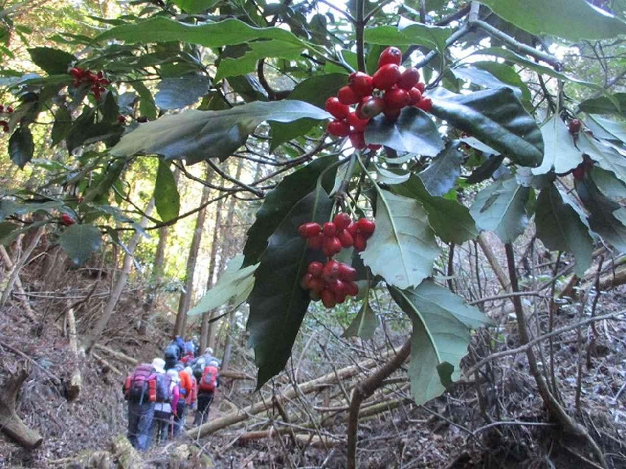 画像11: 【山旅会・登山ガイドこだわりツアー】岡田ガイドからの便り・高宕山ツアーにいってまいりました!