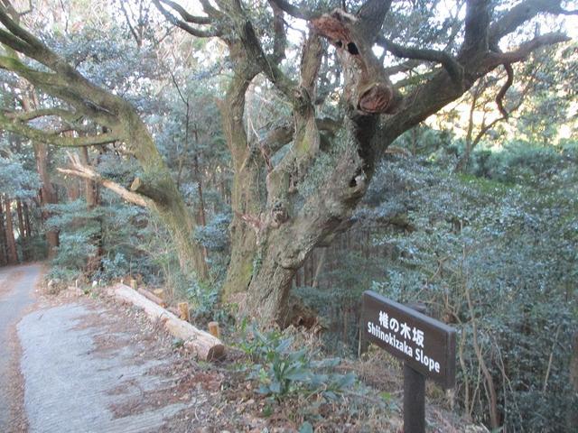 画像4: 【山旅会・登山ガイドこだわりツアー】岡田ガイドからの便り・千葉山ツアーの下見にいってまいりました!