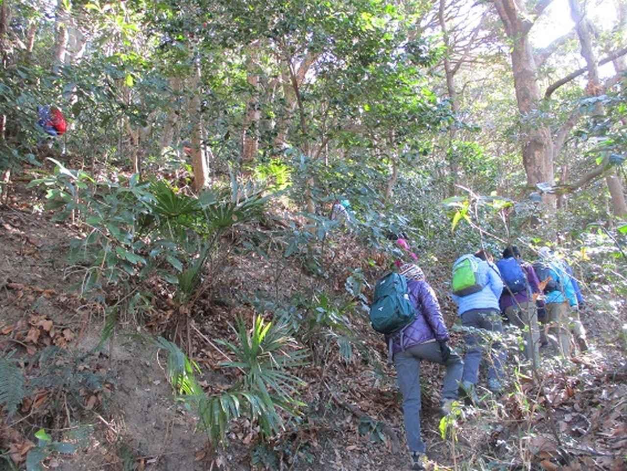 画像6: 【山旅会・登山ガイドこだわりツアー】岡田ガイドからの便り・阿部倉山から二子山ツアーにいってまいりました!