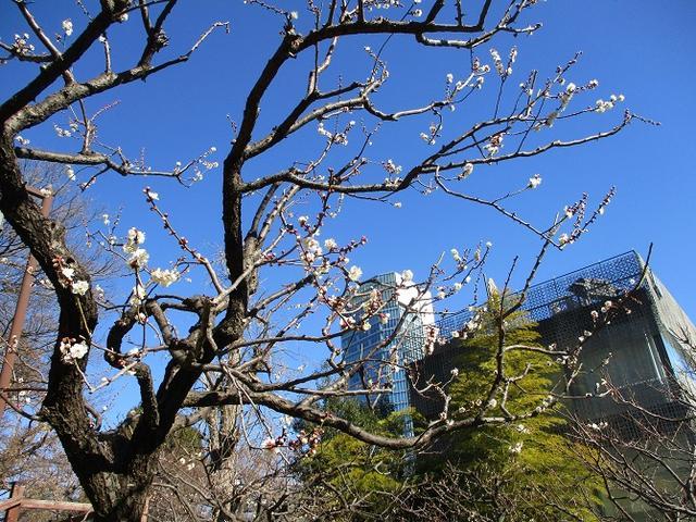 画像7: 【山旅会・登山ガイドこだわりツアー】岡田ガイドからの便り・都内の山ウォーキングの下見にいってまいりました!