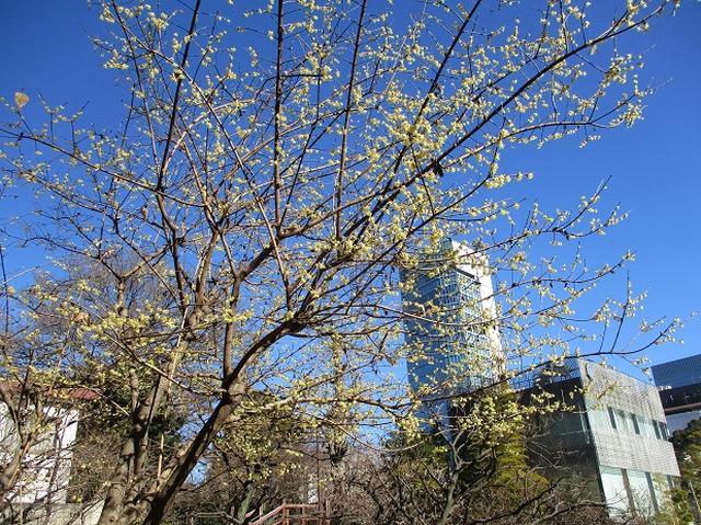 画像9: 【山旅会・登山ガイドこだわりツアー】岡田ガイドからの便り・都内の山ウォーキングの下見にいってまいりました!
