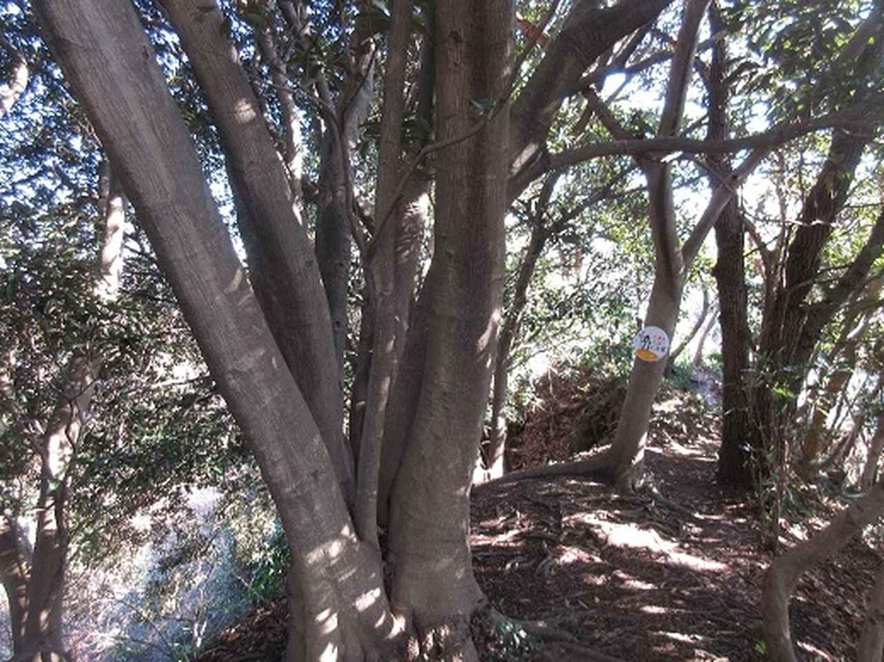 画像4: 【山旅会・登山ガイドこだわりツアー】岡田ガイドからの便り・三浦半島中尾根から乳頭山の下見にいってまいりました!