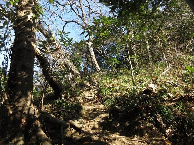 画像2: 【山旅会・登山ガイドこだわりツアー】岡田ガイドからの便り・三浦半島中尾根から乳頭山の下見にいってまいりました!