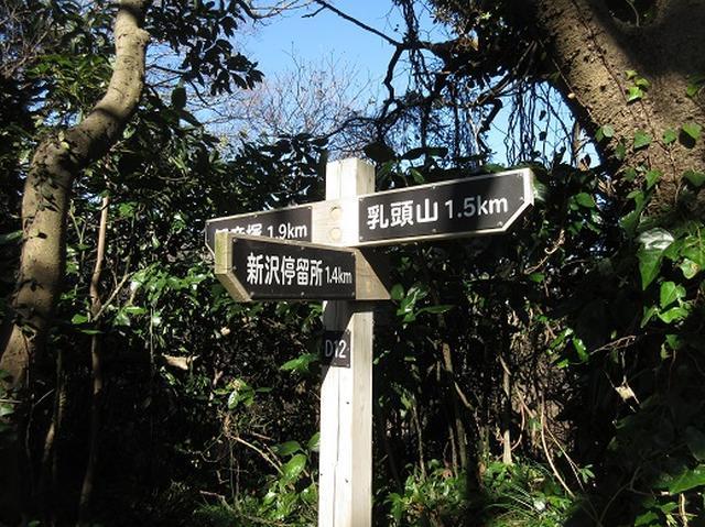 画像9: 【山旅会・登山ガイドこだわりツアー】岡田ガイドからの便り・三浦半島中尾根から乳頭山の下見にいってまいりました!