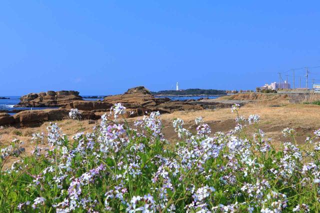 画像: 野島埼灯台を望むお花畑(イメージ)