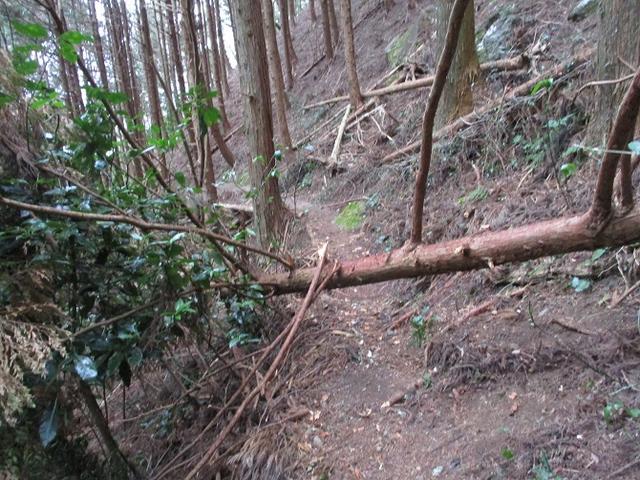 画像7: 【山旅会・登山ガイドこだわりツアー】岡田ガイドからの便り・石谷山(びく石)ツアーの下見にいってまいりました