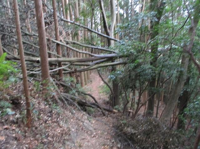 画像8: 【山旅会・登山ガイドこだわりツアー】岡田ガイドからの便り・石谷山(びく石)ツアーの下見にいってまいりました