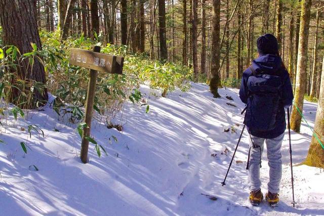 画像: カラマツの林道を歩いて・・・