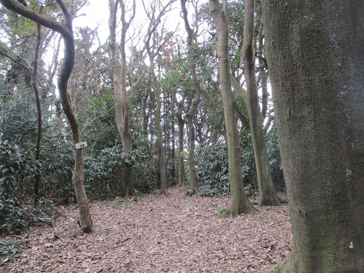 画像6: 2月2日、山旅会のツアーで 森戸川林道から二子山 にいってまいりました!