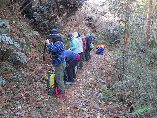 画像7: 2月2日、山旅会のツアーで 森戸川林道から二子山 にいってまいりました!