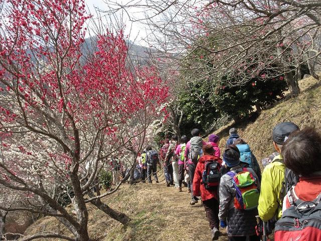画像2: 山旅会ツアー3月までの催行状況のご報告です!