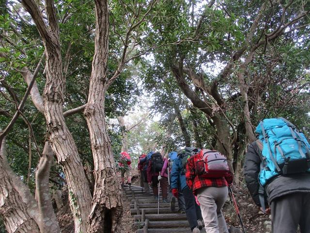 画像1: 新年山行で穂苅先生&岡田ガイドと千葉の 天神山と沖ノ島 へ♪