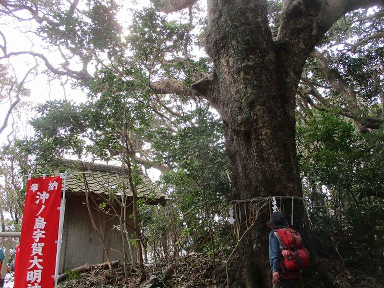 画像12: 新年山行で穂苅先生&岡田ガイドと千葉の 天神山と沖ノ島 へ♪