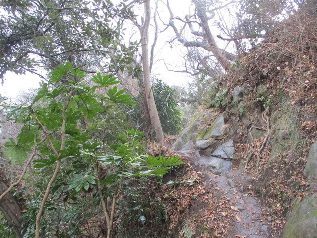 画像2: 2月16日・実施予定の山旅会 乳頭山から畠山 ツアーの下見へ!