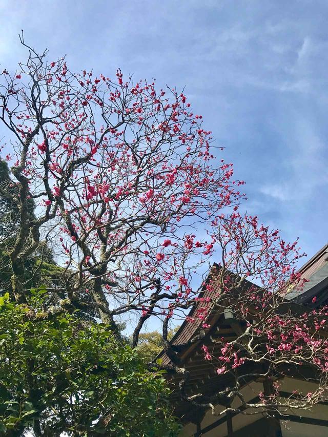 画像: 葉の緑、空の青、花のピンク。春はすぐそこ。