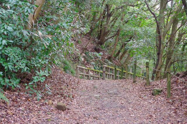 画像: 歩きはじめは穏やかな林道