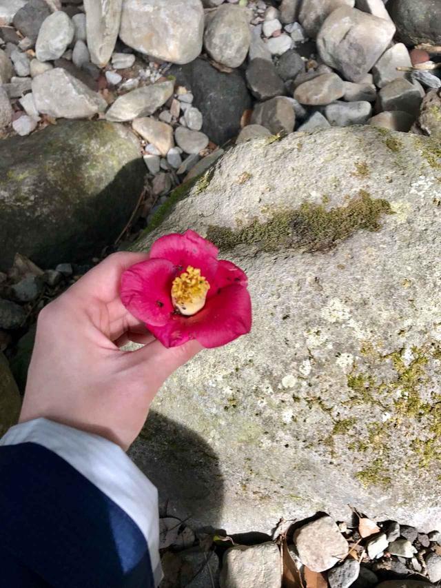 画像: 落ちていた椿の花