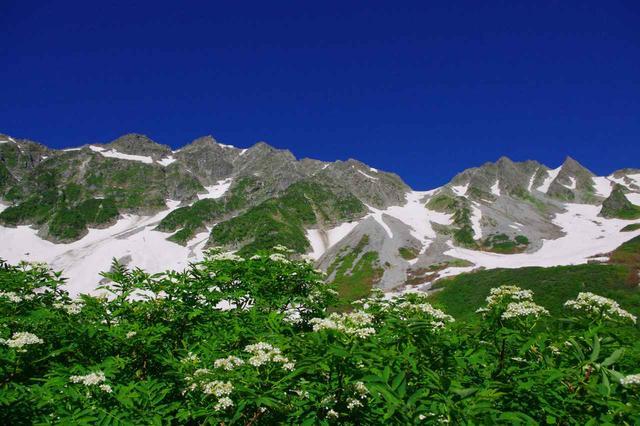 画像: ナナカマドの花と穂高連峰