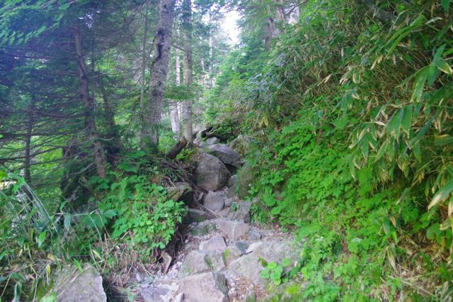 画像: 1箇所だけ若干の上り坂 標高差10mほど、5分もあれば通過できます。