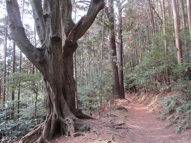 画像14: 来冬ツアーの素材を探して豊橋周辺の山を歩いてきました♪