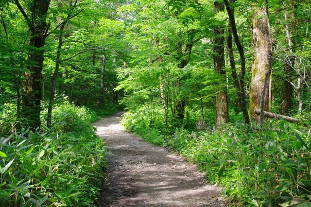画像: ふたたび、平坦な森の中を行きます