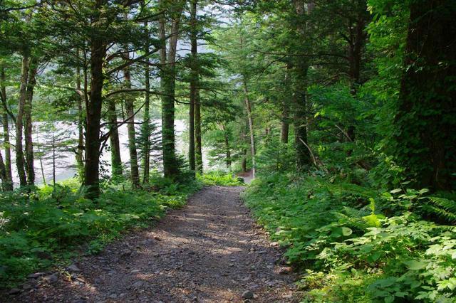 画像: 徳沢〜横尾間の森の中の平坦な道