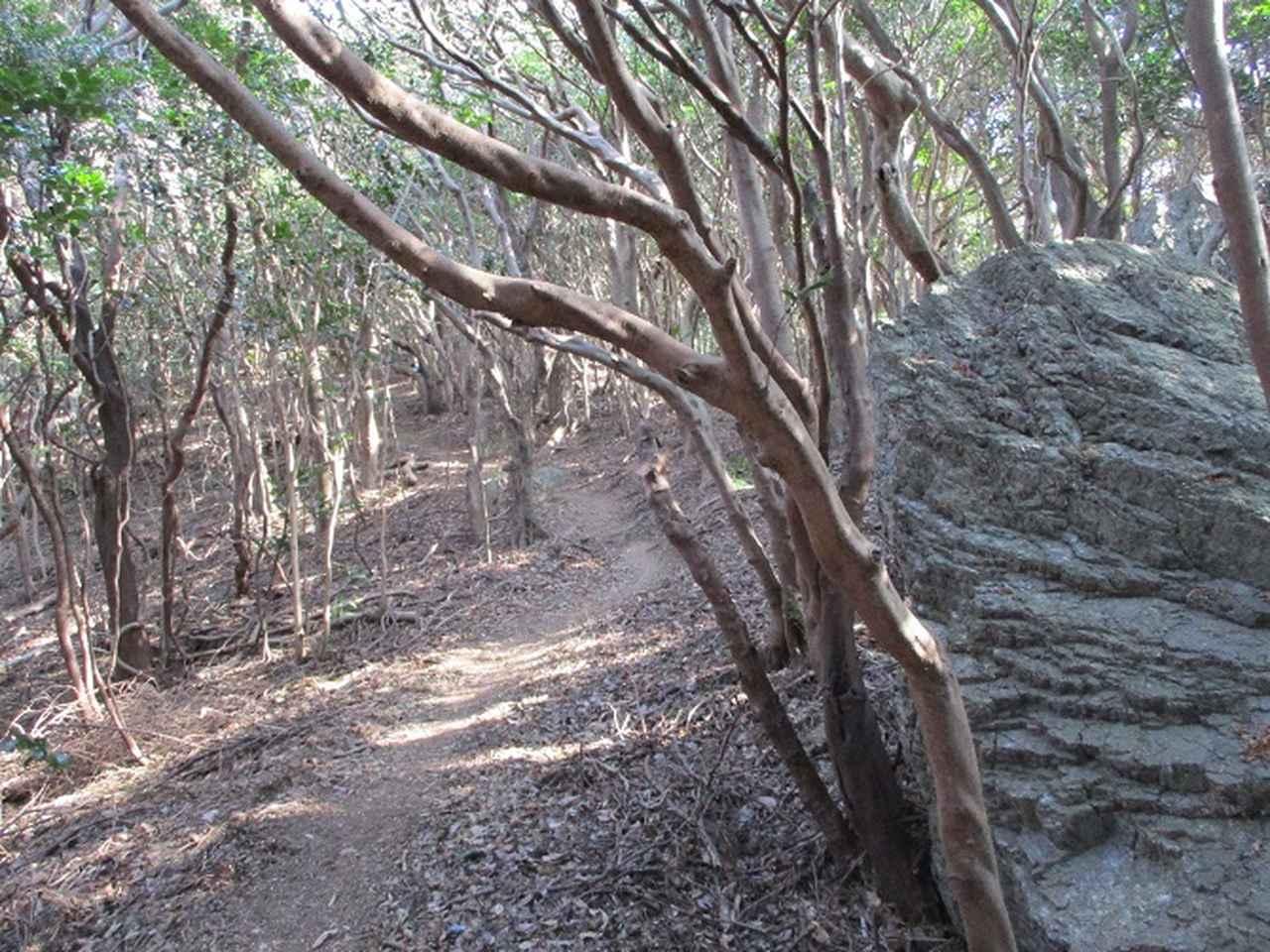画像8: 来冬ツアーの素材を探して豊橋周辺の山を歩いてきました♪