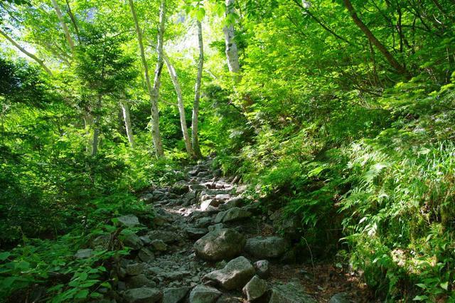 画像: 本谷橋から先の登山道