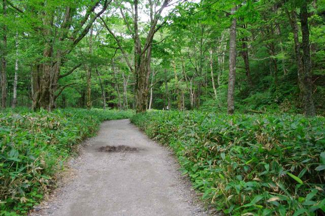 画像: 平坦な森の中の道