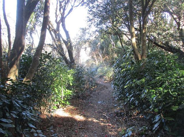 画像9: 来冬ツアーの素材を探して豊橋周辺の山を歩いてきました♪