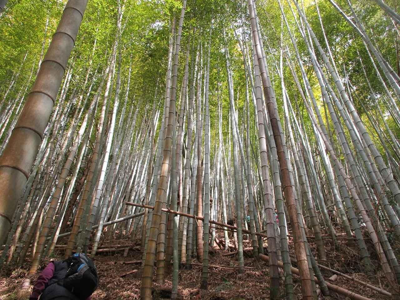 画像5: 1月8日に岡田ガイドと静岡県にたたずむ 石谷山 へ行って来ました♪