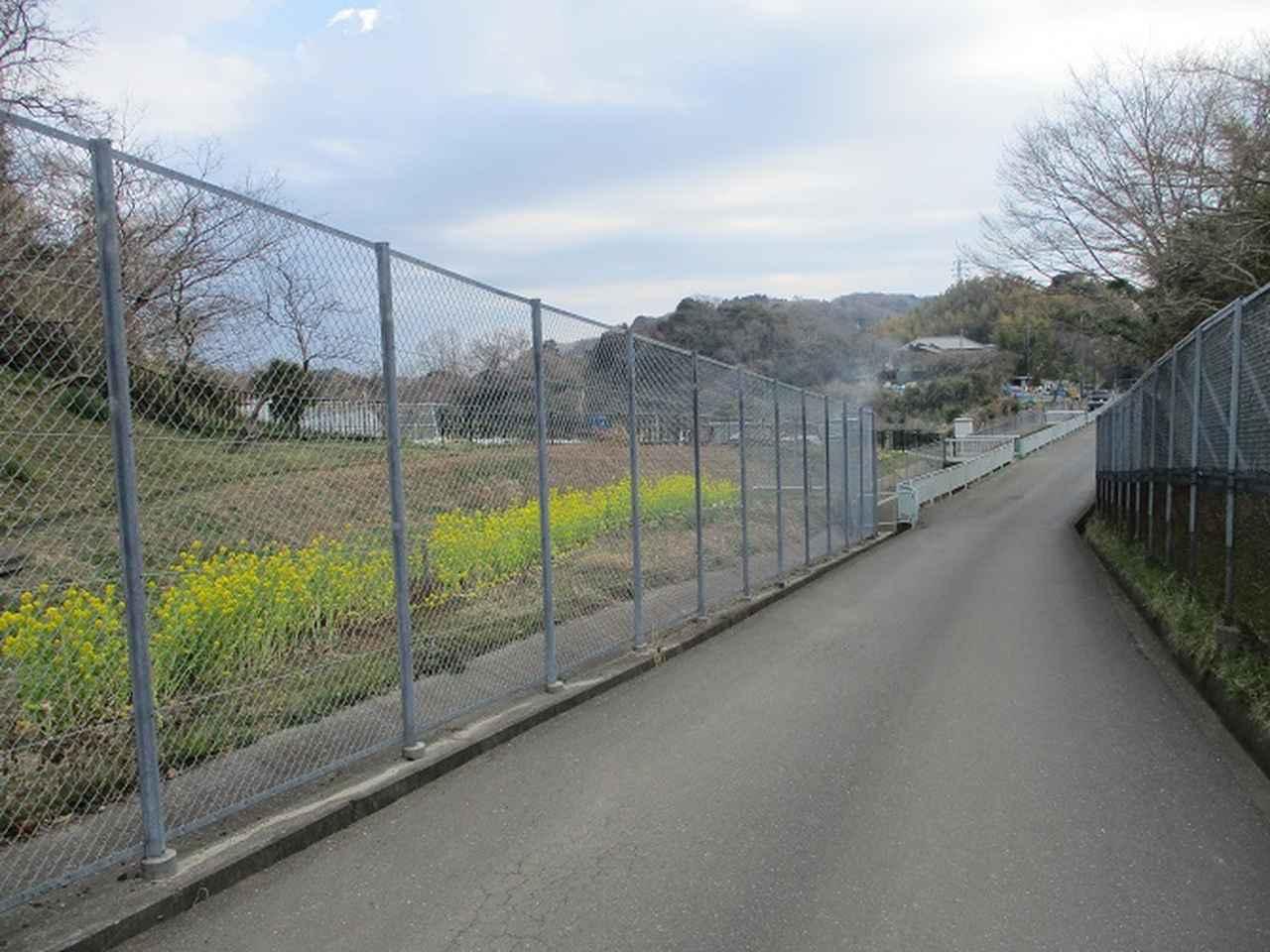 画像4: 3月の山旅会 大楠山から衣笠城跡 ツアーの下見に行ってきました!