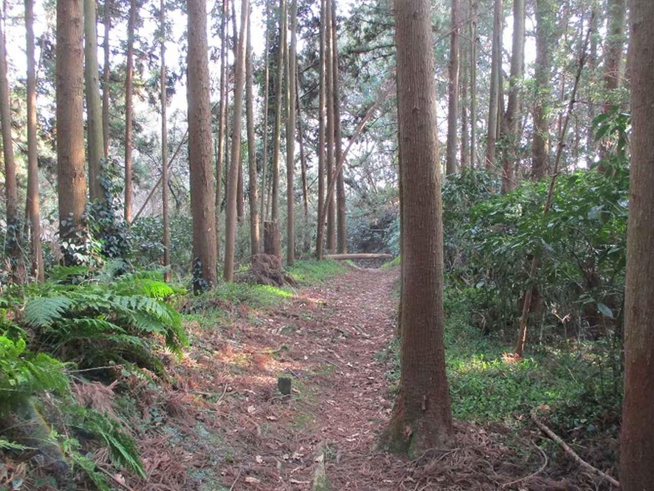画像7: 3月の山旅会 大楠山から衣笠城跡 ツアーの下見に行ってきました!