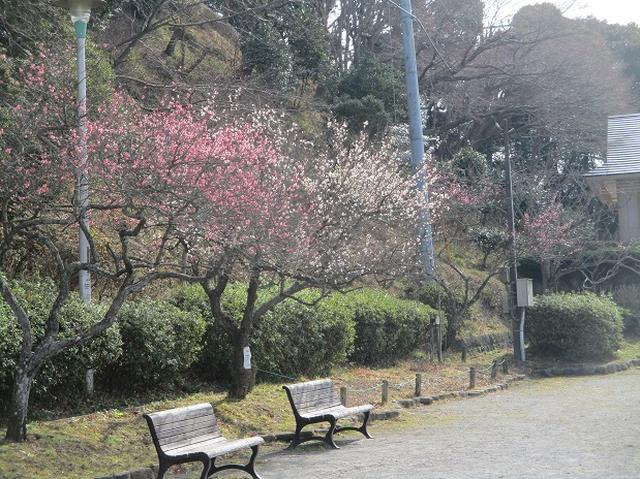 画像9: 2月16日に山旅会 「乳頭山から畠山」 ツアーに行ってきました!