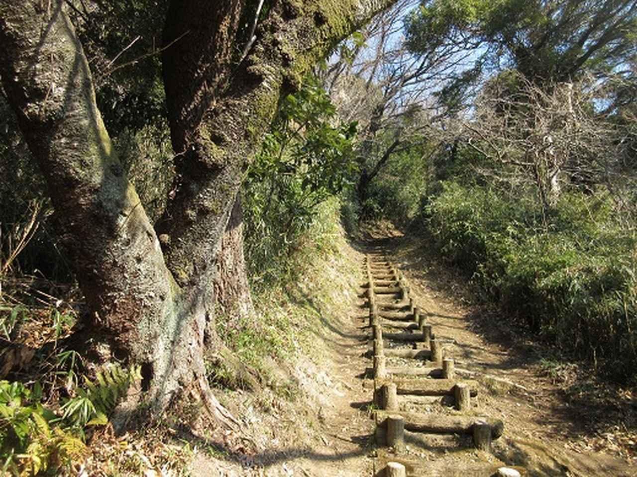 画像9: 3月の山旅会 大楠山から衣笠城跡 ツアーの下見に行ってきました!