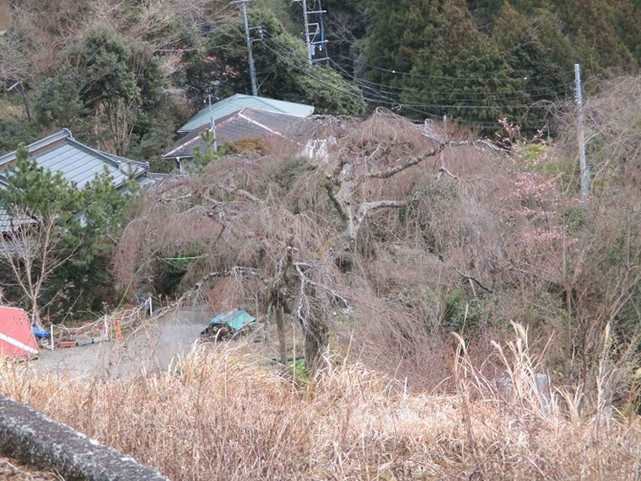 画像11: 2月19日に山旅会 「シダンゴ山」 ツアーに行ってきました!