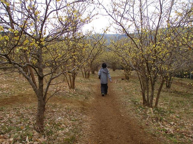 画像9: 2月19日に山旅会 「シダンゴ山」 ツアーに行ってきました!