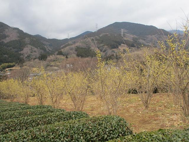 画像8: 2月19日に山旅会 「シダンゴ山」 ツアーに行ってきました!