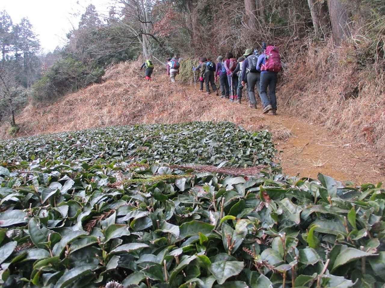 画像1: 2月19日に山旅会 「シダンゴ山」 ツアーに行ってきました!