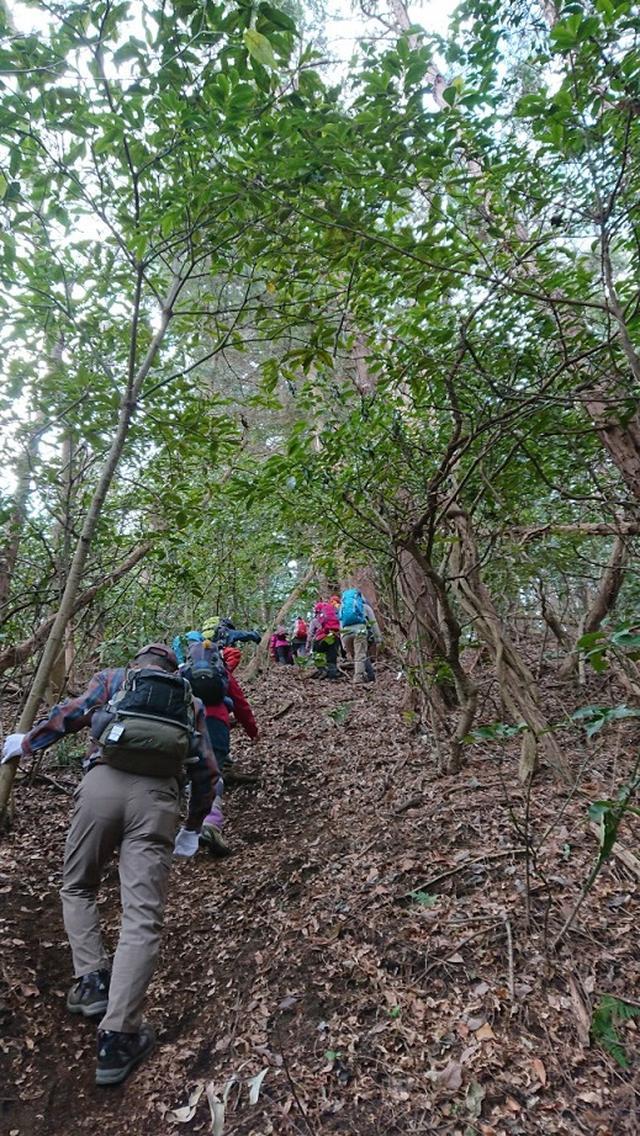 画像6: 2月17日に佐藤威行ガイドのツアーで曽我山へいってきました♪