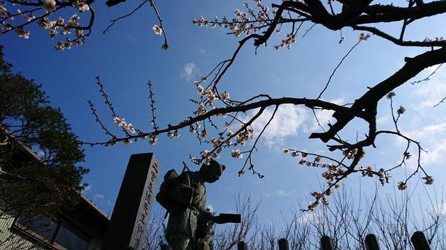 画像9: 2月17日に佐藤威行ガイドのツアーで曽我山へいってきました♪