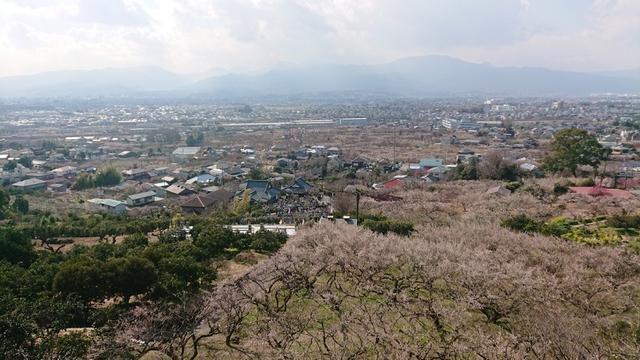 画像12: 2月17日に佐藤威行ガイドのツアーで曽我山へいってきました♪