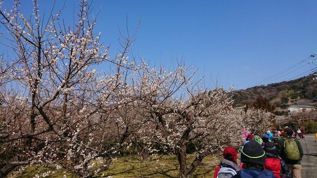 画像11: 2月17日に佐藤威行ガイドのツアーで曽我山へいってきました♪