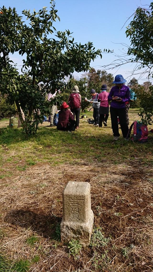 画像13: 2月17日に佐藤威行ガイドのツアーで曽我山へいってきました♪