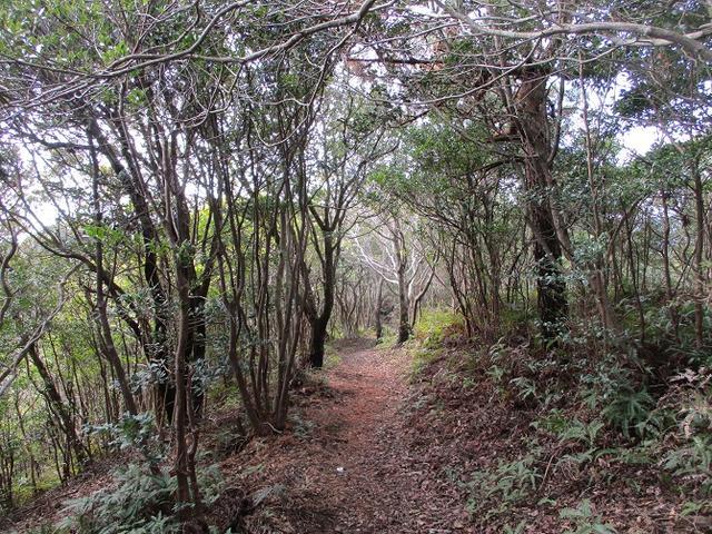 画像5: 3月の山旅会 「横山と朝熊ヶ岳」 の下見にいってきました!