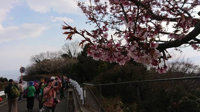 画像15: 2月17日に佐藤威行ガイドのツアーで曽我山へいってきました♪
