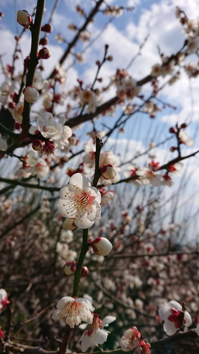 画像8: 2月17日に佐藤威行ガイドのツアーで曽我山へいってきました♪