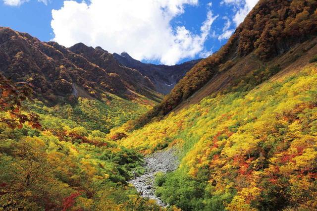 画像: 涸沢への登山道も紅葉に包まれます