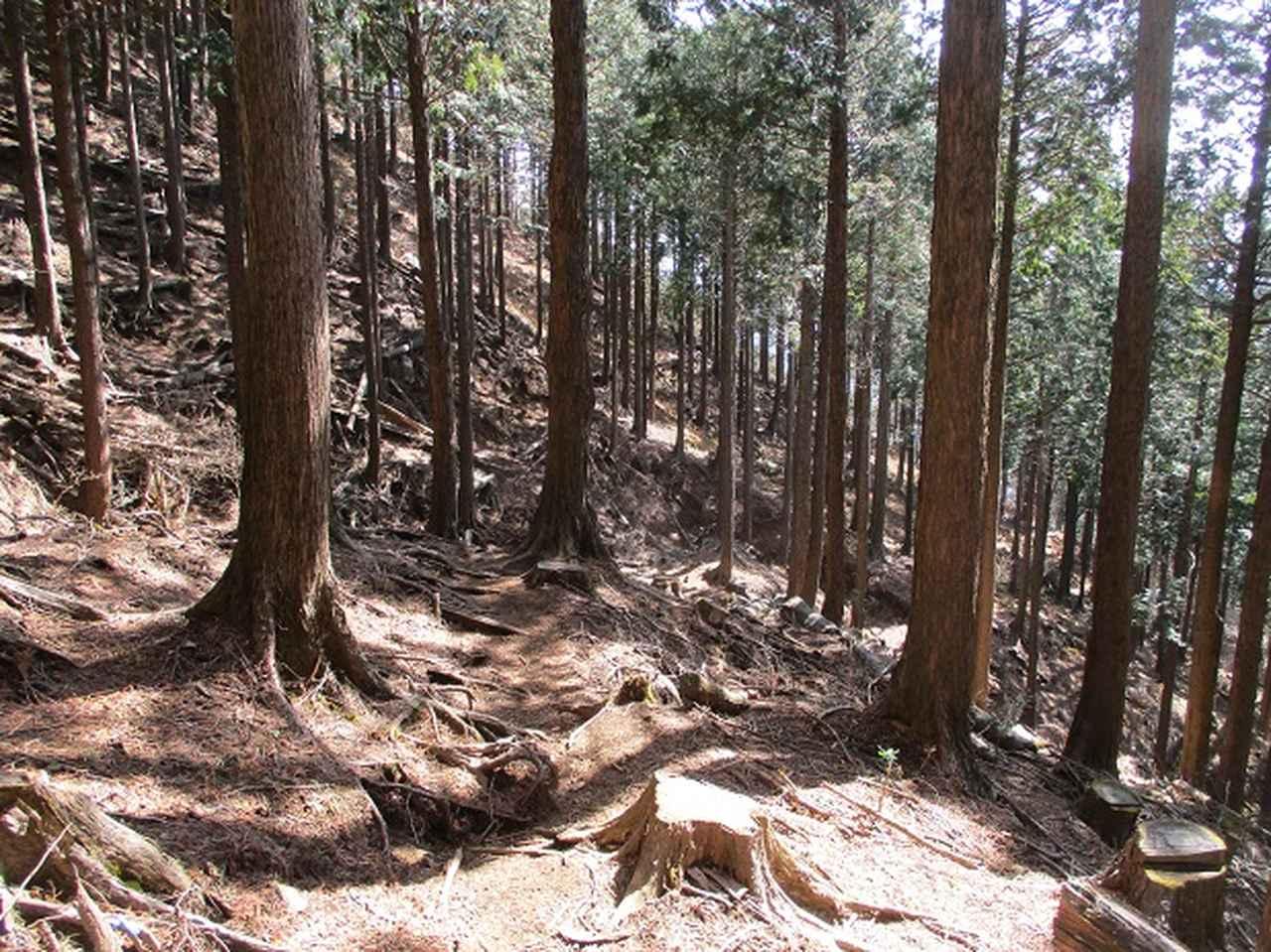 画像7: 3月の山旅会・現地集合 「高松山」 ツアーの下見に行ってきました!