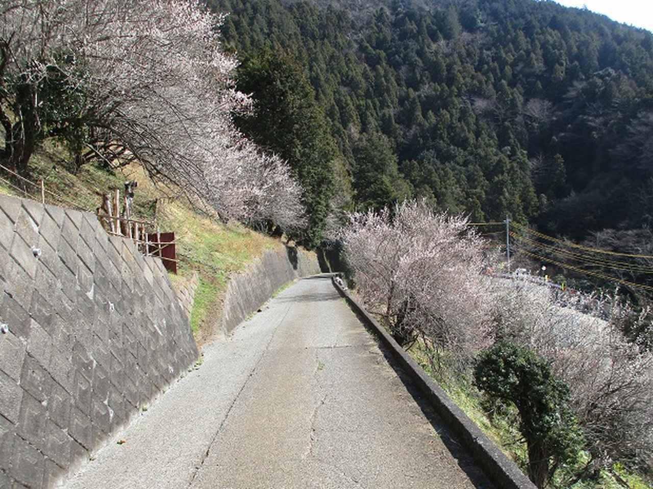 画像11: 3月の山旅会・現地集合 「高松山」 ツアーの下見に行ってきました!